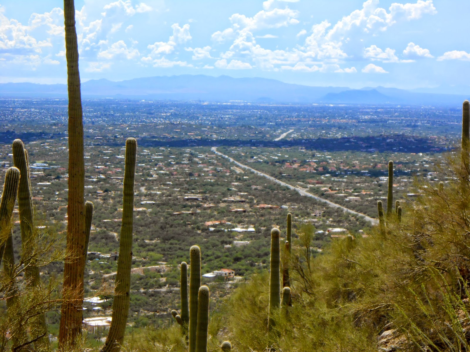 view of tucson while hiking in tucson mountain park