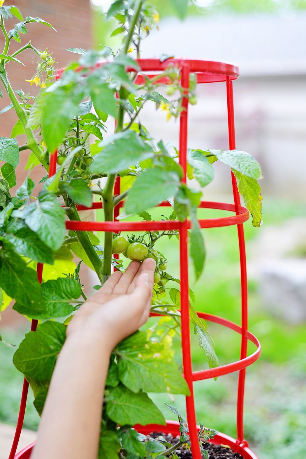 PC® Garden Centre Tomato Colour Veg Cage