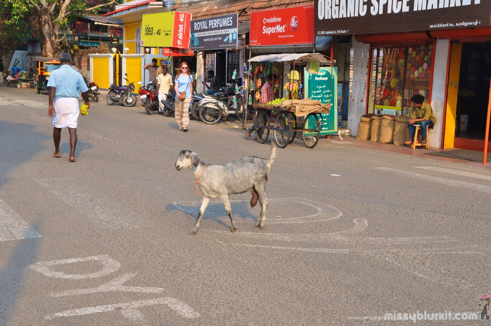 Goat crossing the road