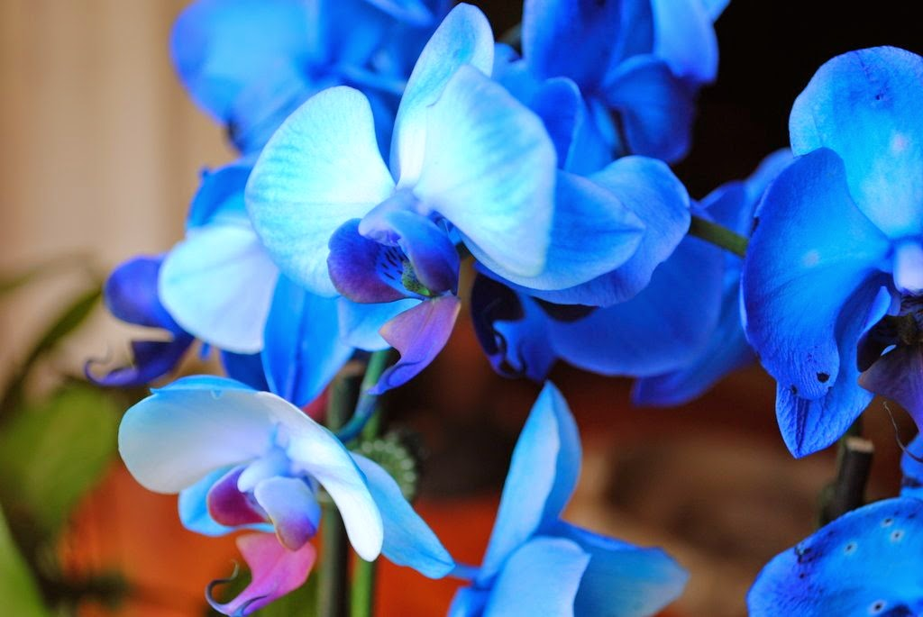 Top 10 Most Beautiful Flowers in the World   Mathias Sauer