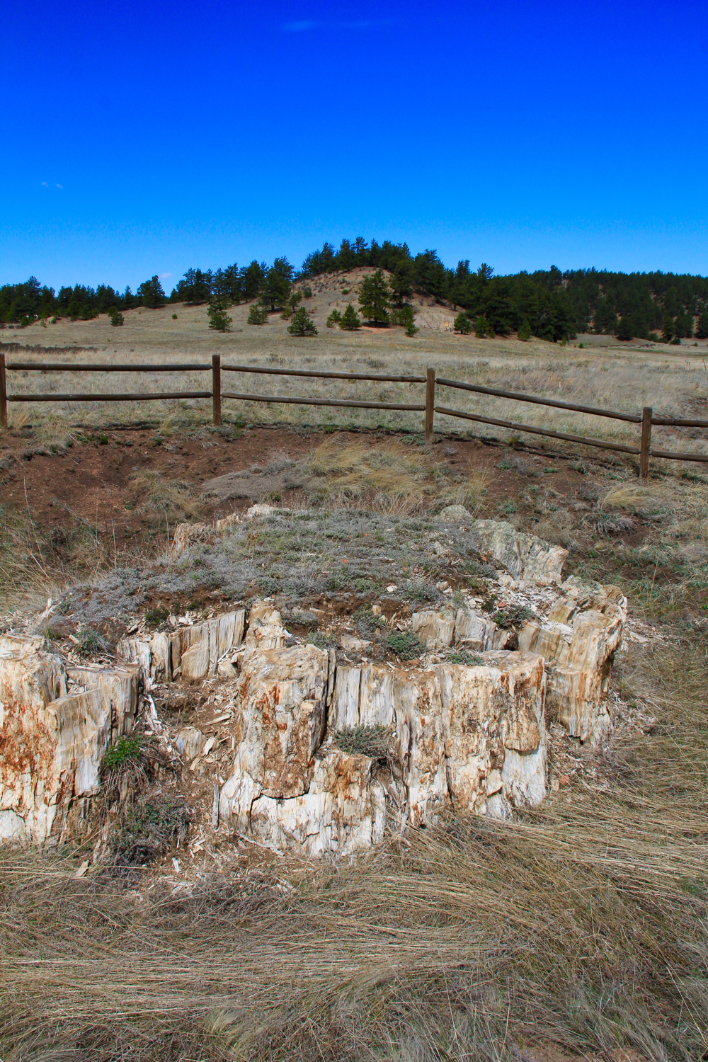 Colorado lifestyle florissant fossil beds petrified forest loop sciox Choice Image