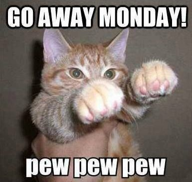 funny Monday quotes cat meme images