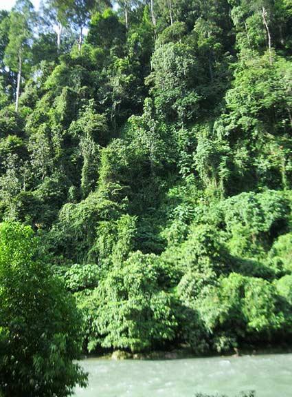 bukit lawang lahat sumatera utara