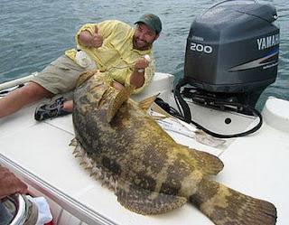طريقة صيد سمك الهامور