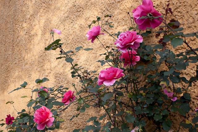 rosas callejeras en Bogotá