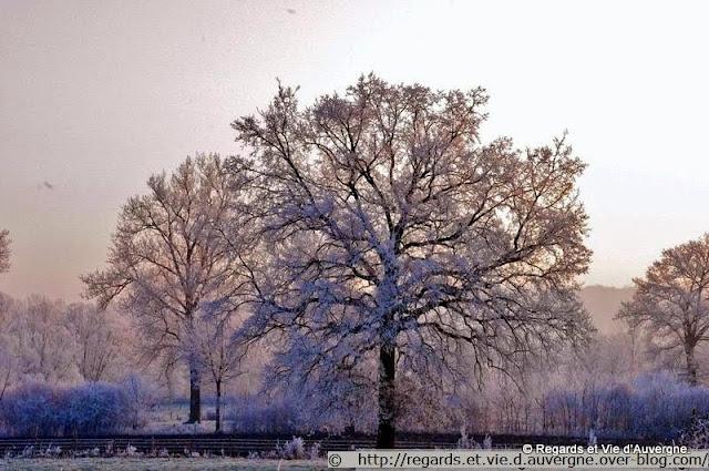 arbres couvert de givres, hiver