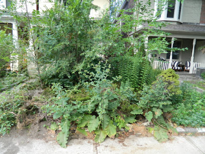 Leslieville Toronto front garden summer cleanup before by Paul Jung Gardening Services