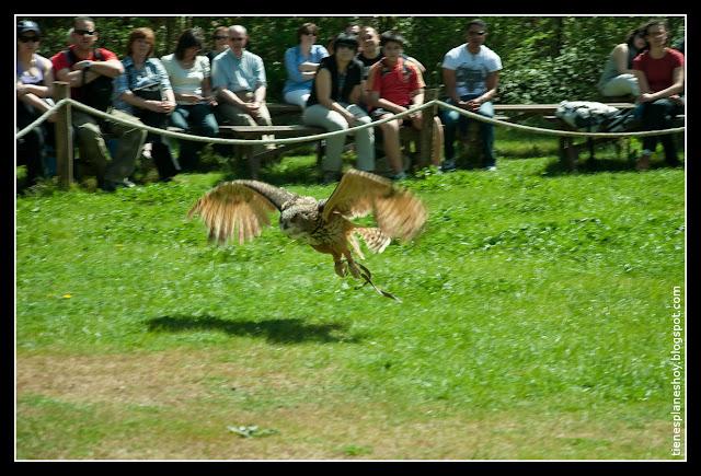 Exhibición aves rapaces Monasterio de Piedra