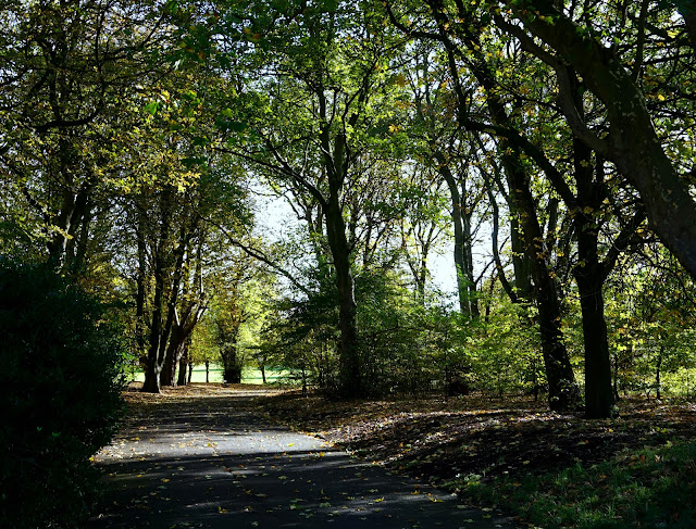 path surrounded by trees in sefton park, liverpool