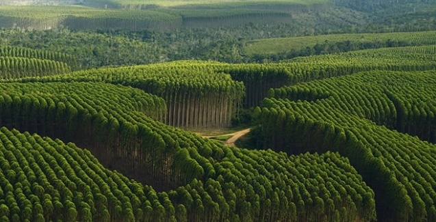 Resultado de imagem para Florestas Plantadas