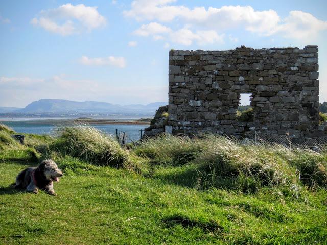 Killaspugbrone Church ruins in County Sligo, Ireland