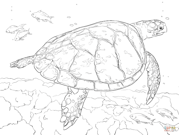 Click The Realistic Hawksbill Sea Turtle Coloring Pages To View Printable