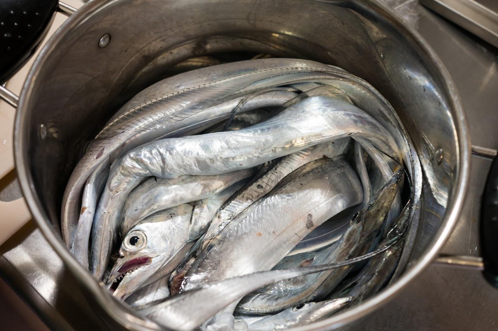 金龜子的肉慾廚房: 白帶魚實驗室!如何處理白帶魚
