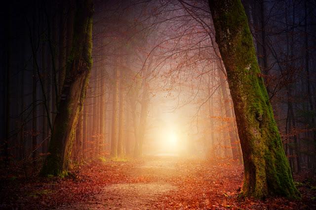 autumn forest automne foret magie mystique