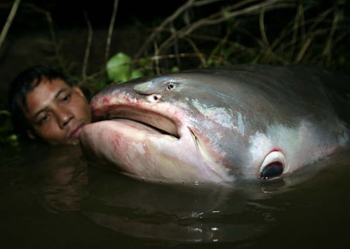 Big Fishes of t...