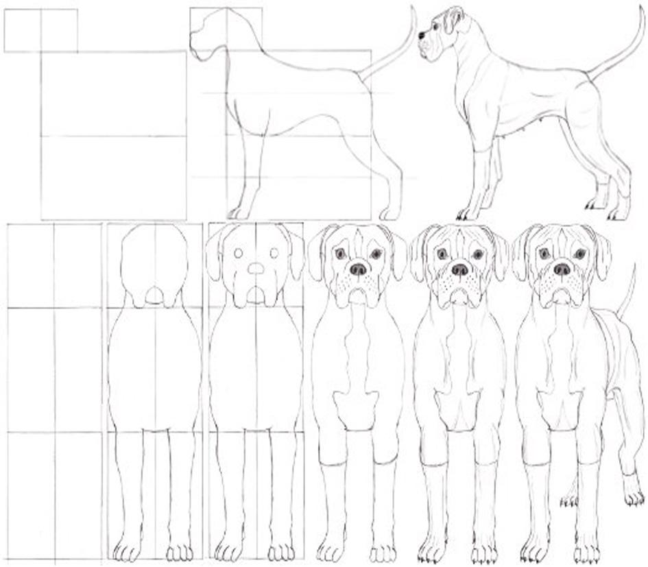 Desenhe Tudo Desenhar Animais