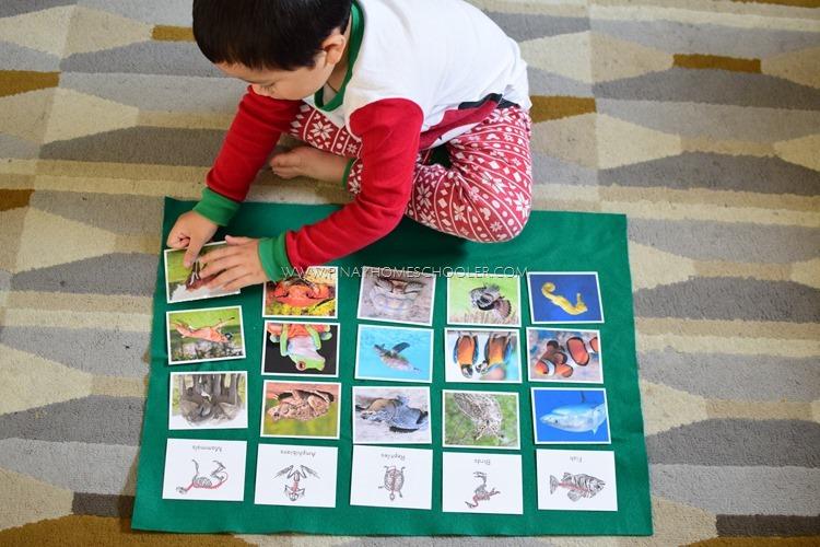 VERTEBRATE ANIMALS SORTING CARDS