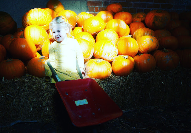 Pumpkin Picking at Llynclys Shropshire | Shropshire Days Out