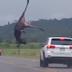 Vídeo: Carro em alta velocidade atinge animal em rodovia, assista