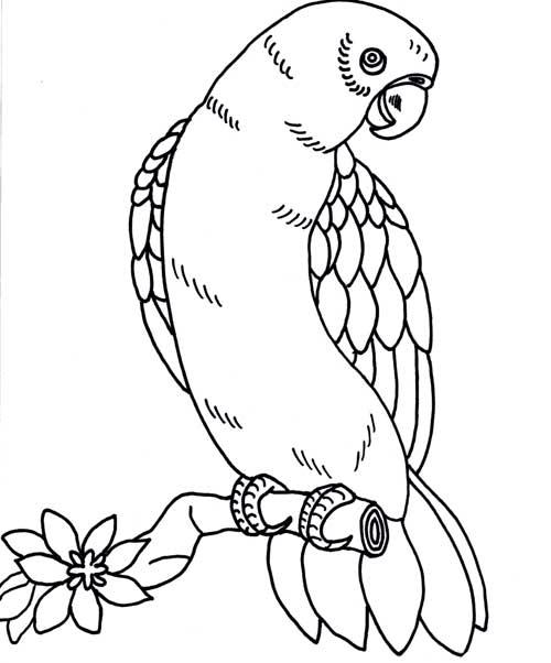 Papagaio Periquito Tucano E Arara Desenhos Para Colorir