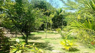 FazendasBahiaVerde Canavieiras