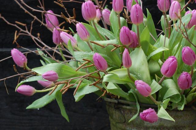 voorjaarstuin tulpen in de regen