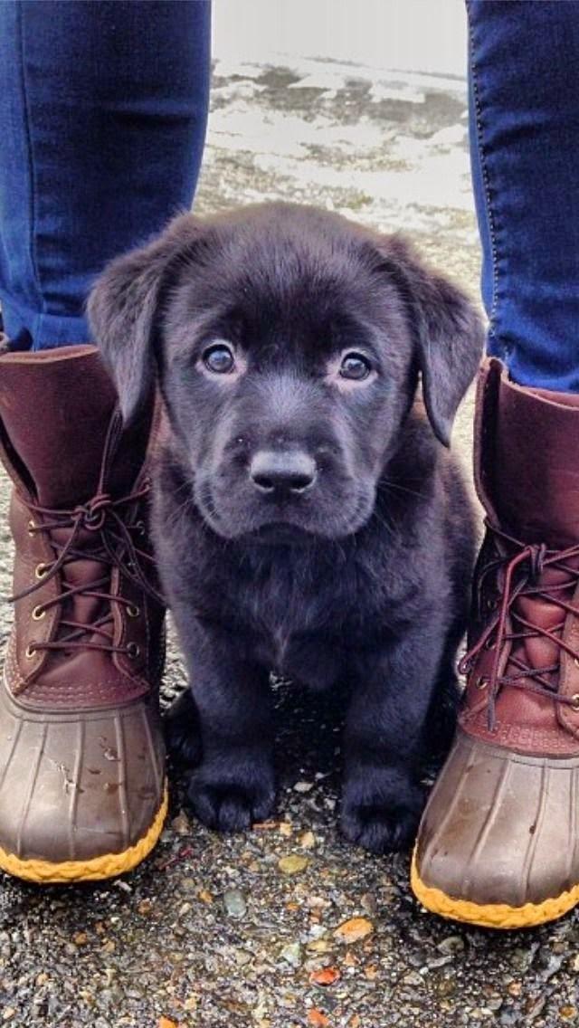 Cute Black Small Puppy