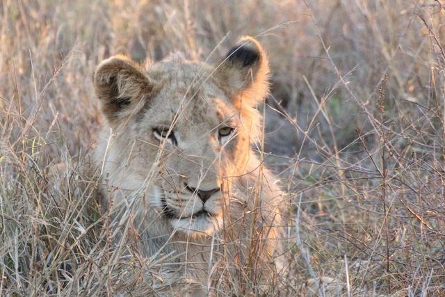 León de Hlane National Park