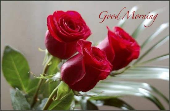 Good Morning ..Have A Nice Day!! ~ Hindi Sms, Good Morning ...
