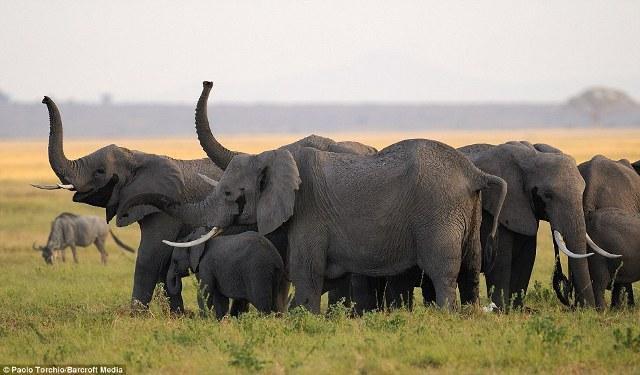 Sains Tahun 5: Bab 2 - Pelajaran 3 - Cara kemandirian haiwan