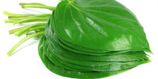 8 Benefits of Betel Leaf Stew when Taken