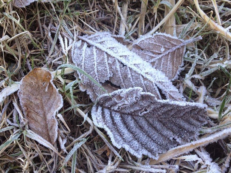 frosted leaves by Karen Williams