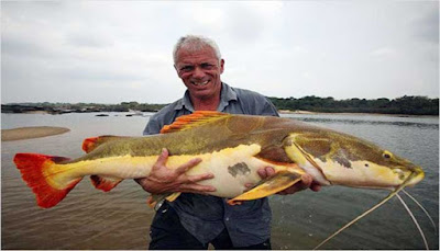 Amazon Catfish