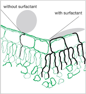 Efects of surfactant in the absortion by plants of glyphosate