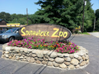 things to do, metro west, zoo, southwick's zoo, family, animals, summer fun