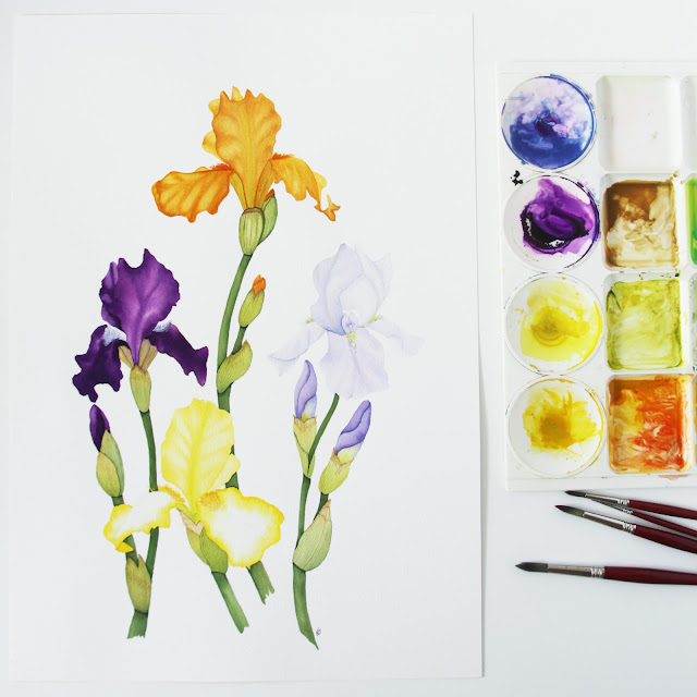 painting, watercolor, botanical watercolor, spring iris, colorful iris, Anne Butera, My Giant Strawberry