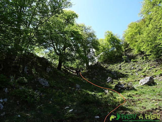 Ruta al Cantu Ceñal: Bosque camino al Valle del Resecu