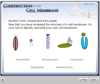 https://www.wisc-online.com/learn/natural-science/life-science/ap1101/construction-of-the-cell-membrane
