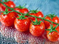 Panduan Menanam Tomat Rampai di Pot Untuk Pemula