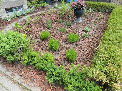 Cabbagetown Toronto front garden makeover after Paul Jung Gardening Services
