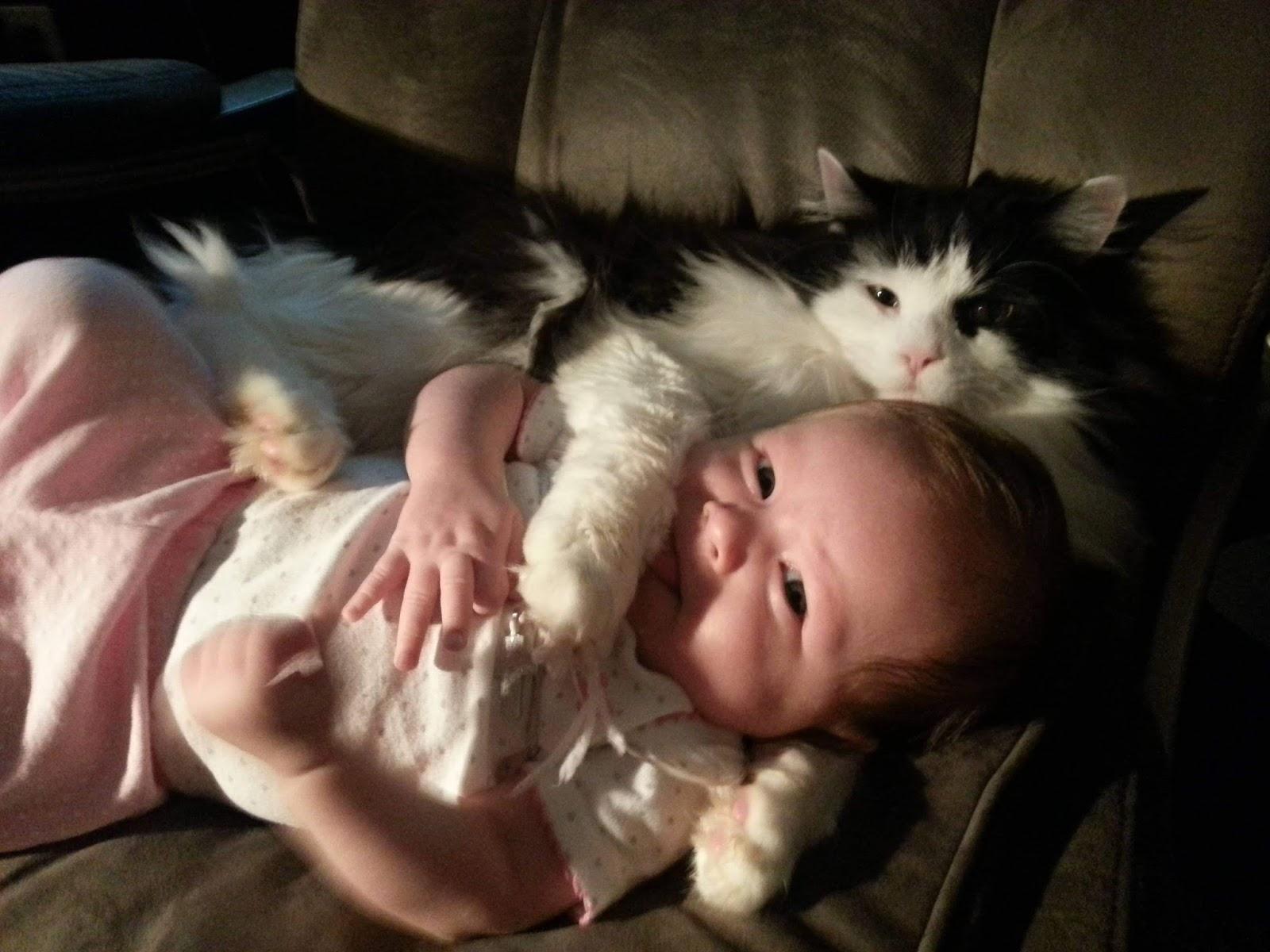 Funny cats - part 242, cute cat images, best cat photos