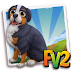 Fv 2 Bernese Mountain Puppy  (baby ,adult )