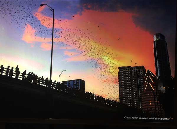 Looking at the flight of bats at sunset from under the Congress Ave Bridge (Courtesy: Austin Convention and Visitor Bureau