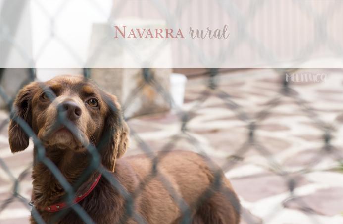navarra rural fotografía perro