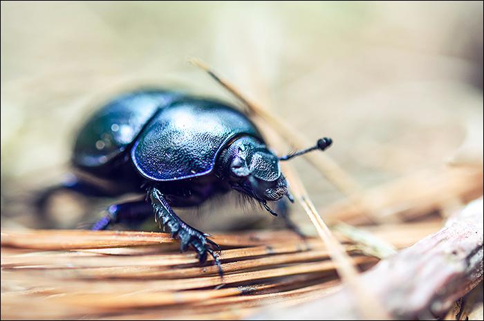 Wandern NRW Käfer Makro (1)