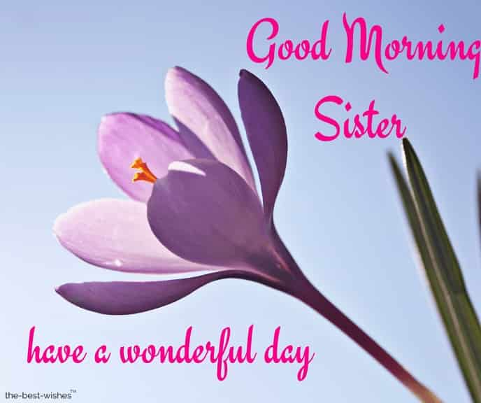 good morning sister have a wonderful day