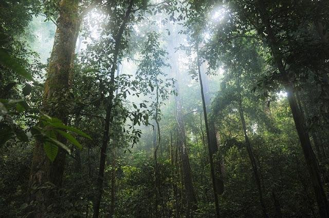 Δέντρα σε τροπικό δάσος