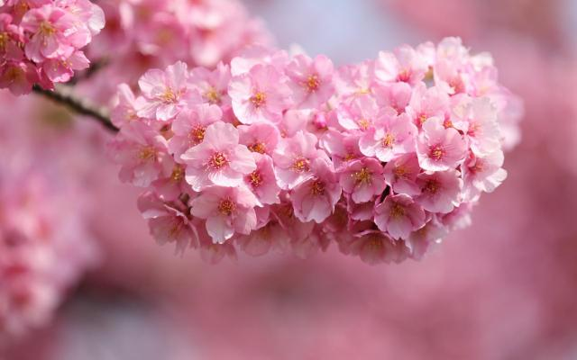 Pretty Pictures Of Pink Flowers