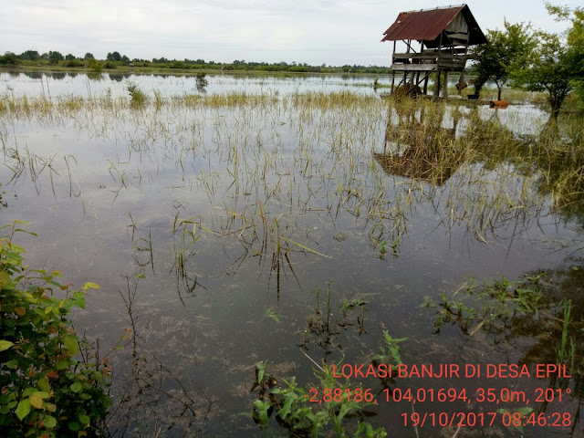 Akibat Banjir, 3 Desa Di Muba Gagal Panen