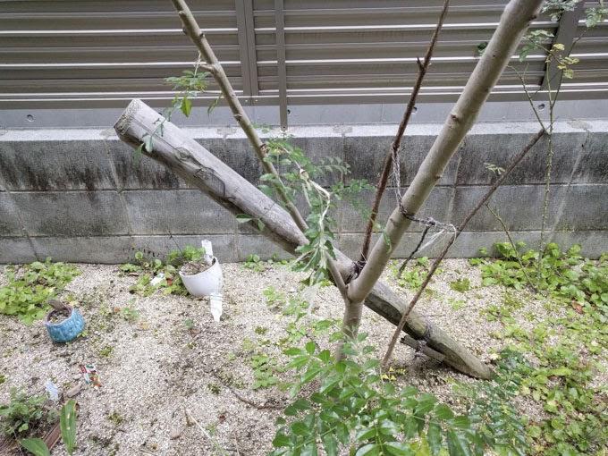 木の杭を抜いた